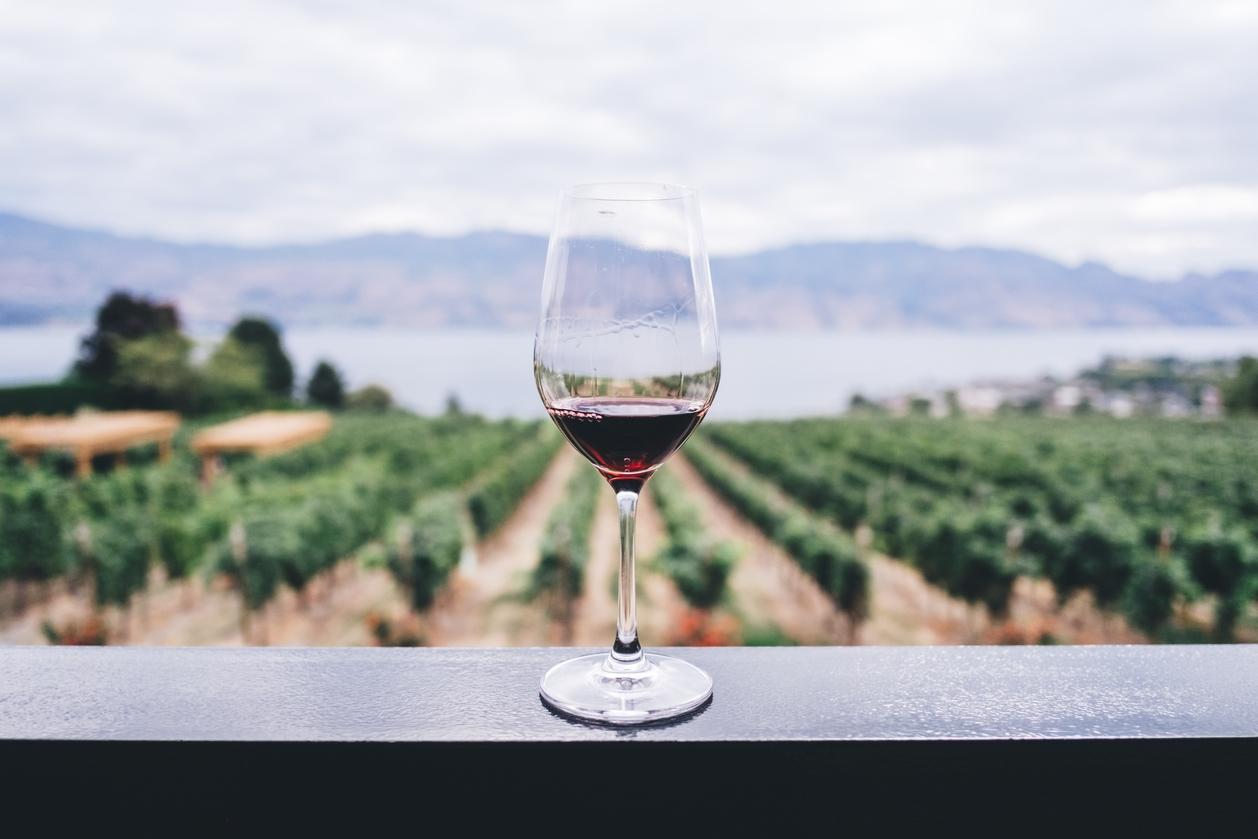 Red wine glass in vineyard