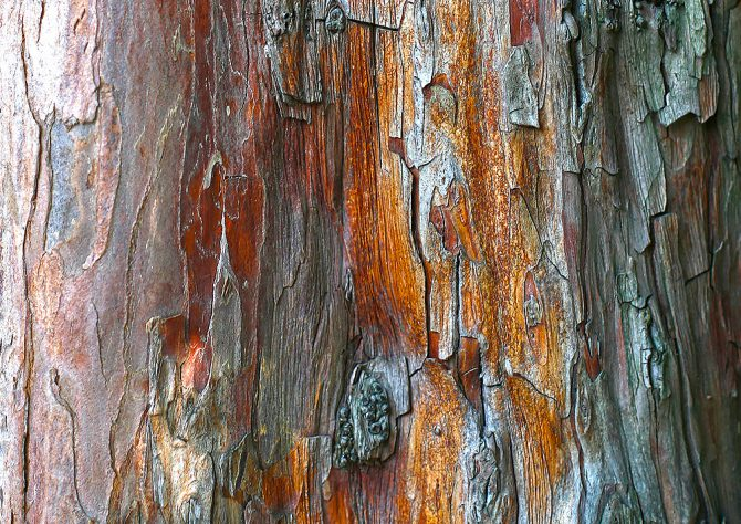 Tree Bark Orange and Blue Texture
