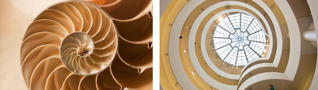 Guggenheim Museum architecture spiral staircase shell inspiration