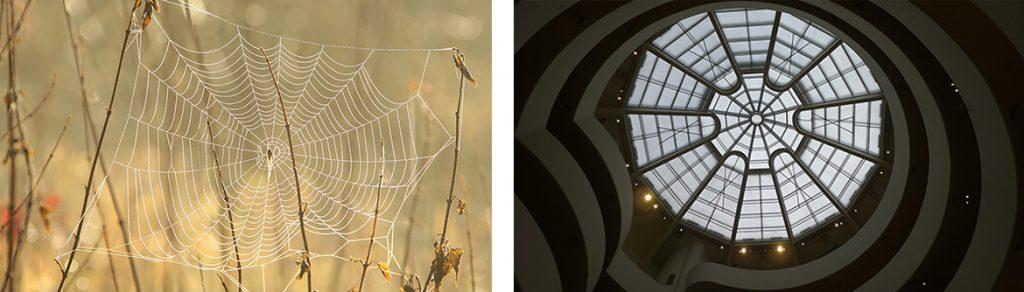 Guggenheim architecture rotunda skylight inspired by spiders web